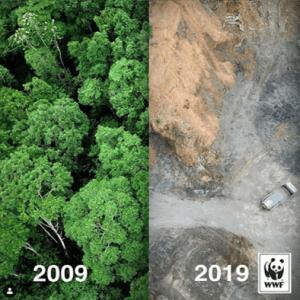 WWF_10yearchallenge