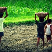 child-labour-indian-farms-260nw-766450453
